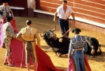 bull fighting ends in Spain